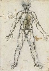 200px-anatomical_male_figure_showing_heart_lungs_and_main_arteries