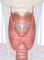 thyroid_parathyroid_glands